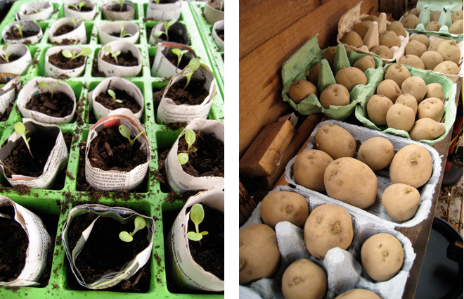 seeds-and-spuds