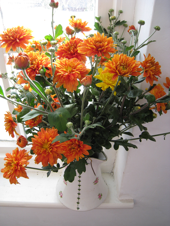 Chrystanthemums display