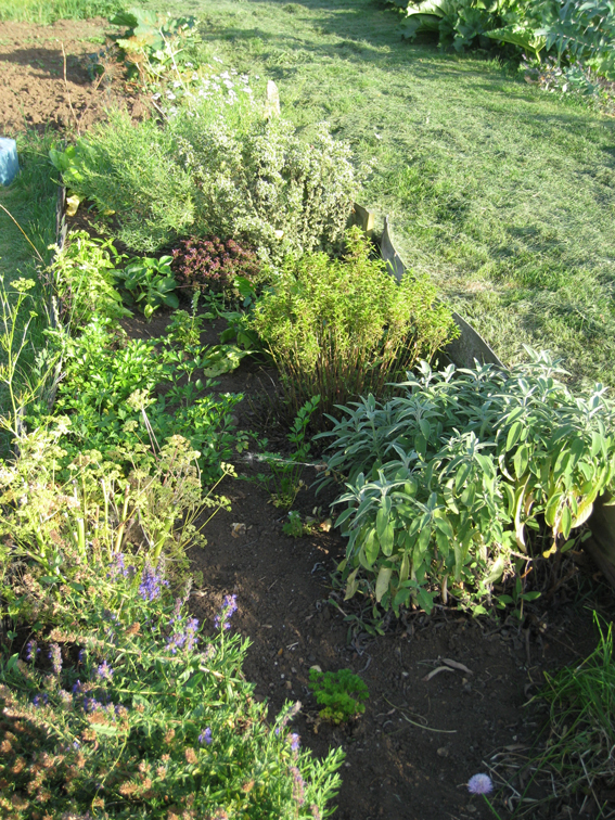 Summer 09 herb bed