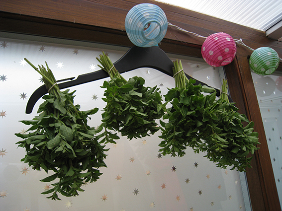 oregano herb drier
