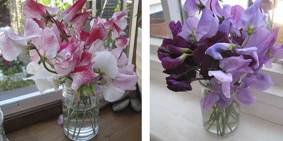 sweetpeas at home1