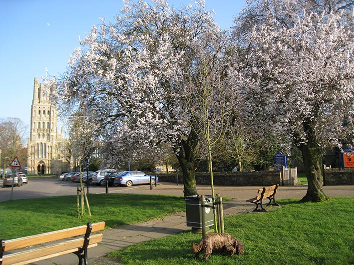 Ely in spring