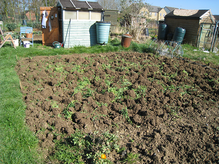 green manure bed