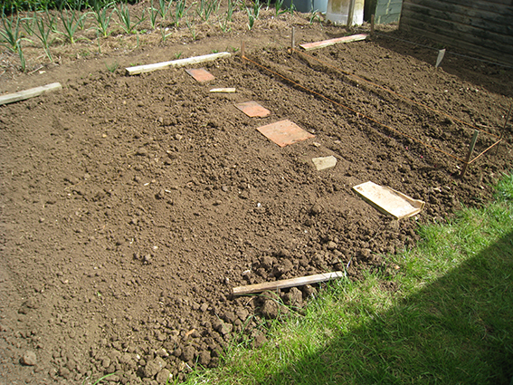 root crops bed1