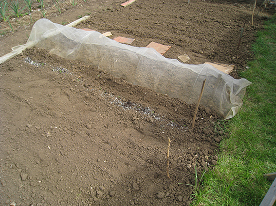 root crops bed2
