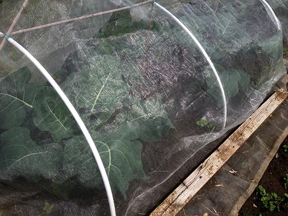 broc under net