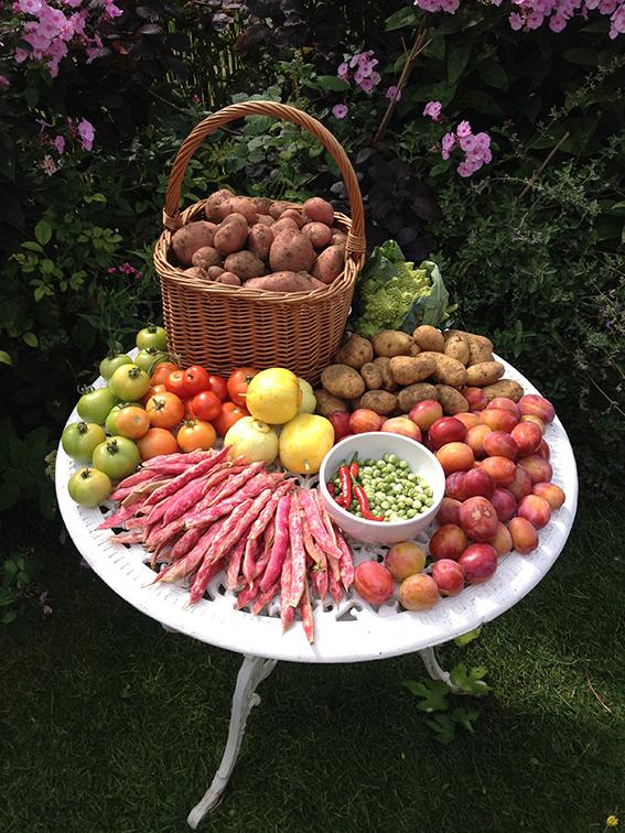 Aug harvest