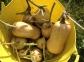 bucket o' squash2