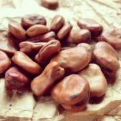 broad bean seed