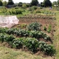 allotment top end June
