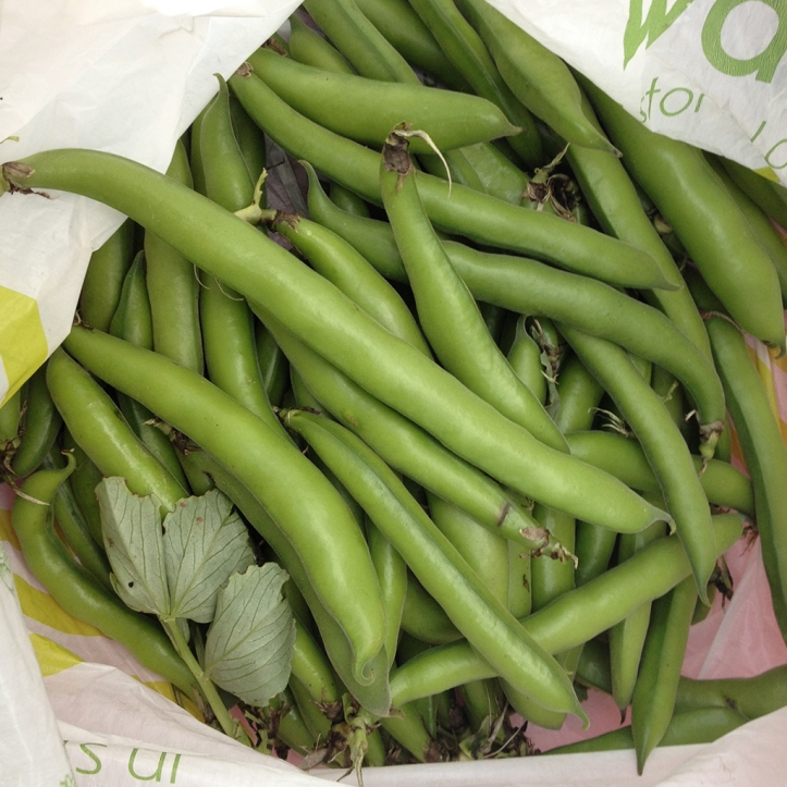 broad beans donation