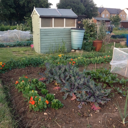 top plot + shed