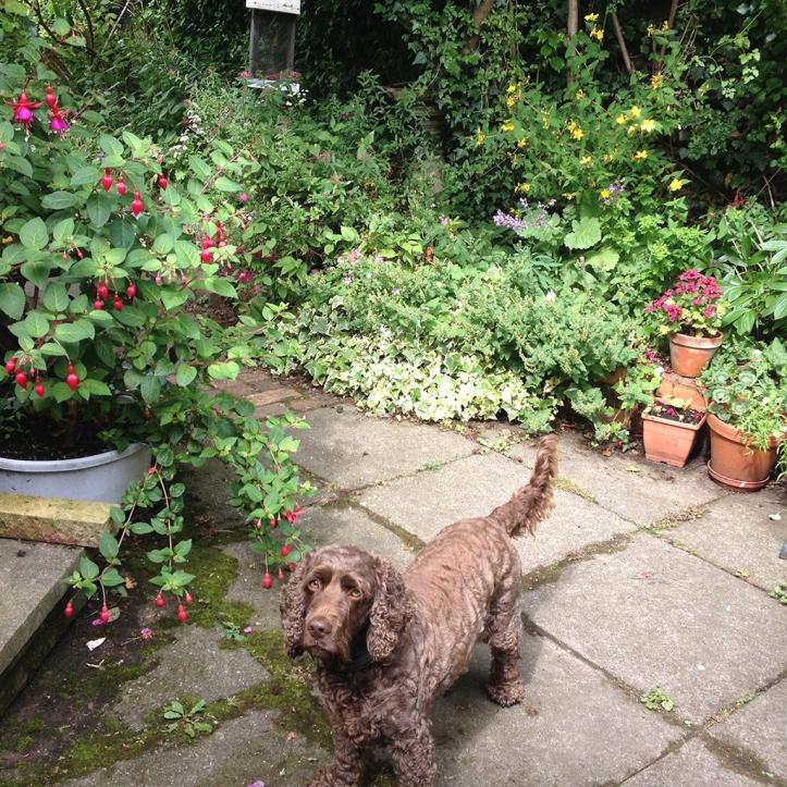 Mums garden 1