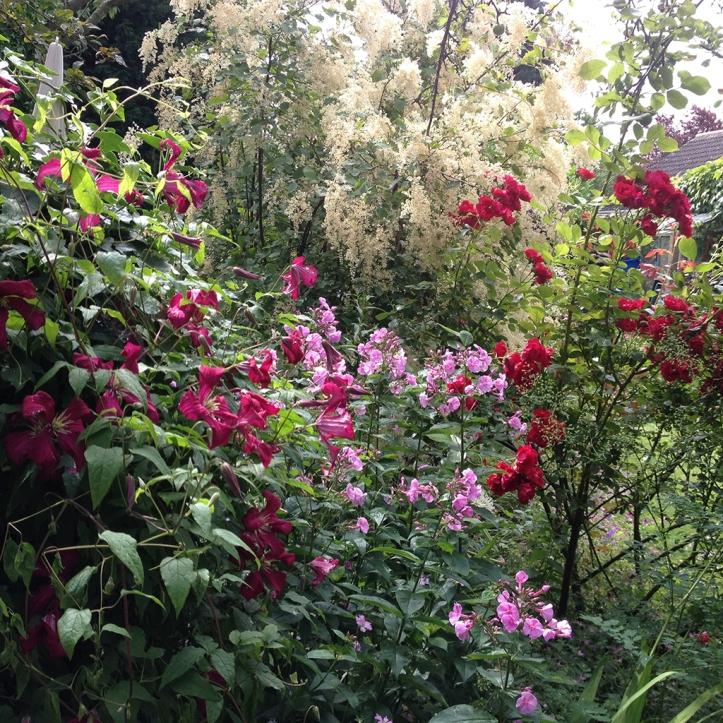 Mums garden 11
