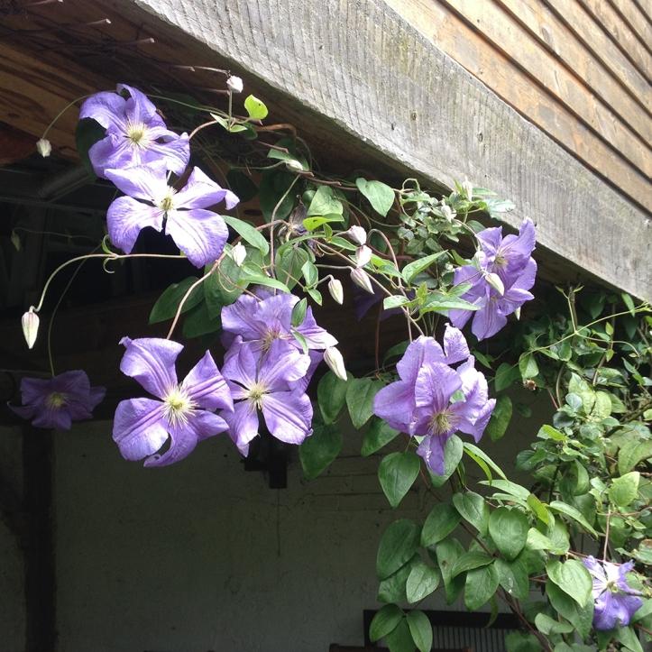 Mums garden 13