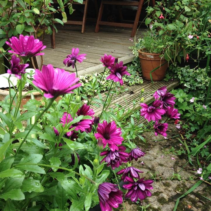Mums garden 14