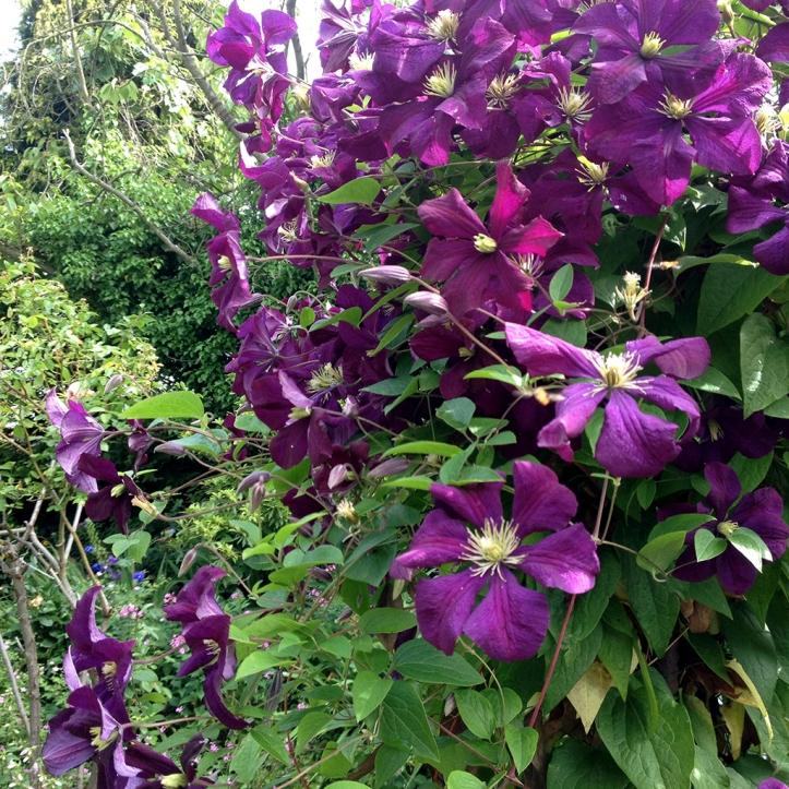 Mums garden 16