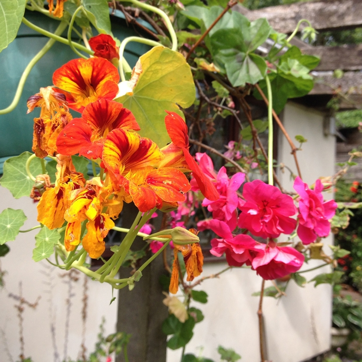 Mums garden 19