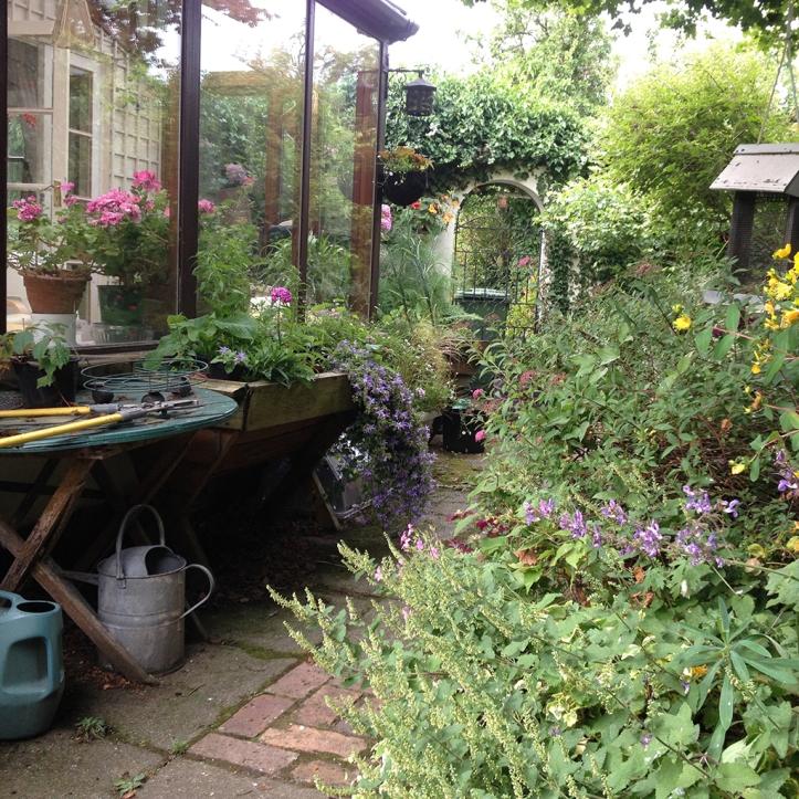 Mums garden 5