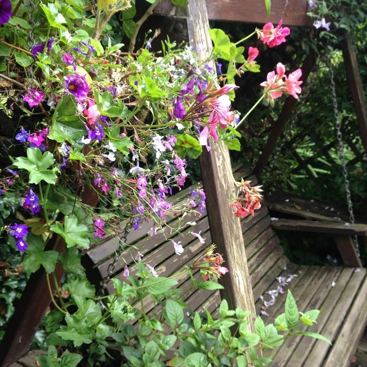 Mums garden 6