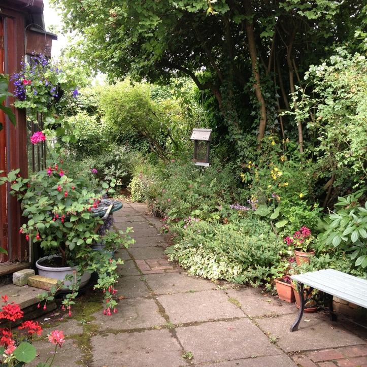 Mums garden 7