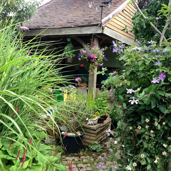 Mums garden 8