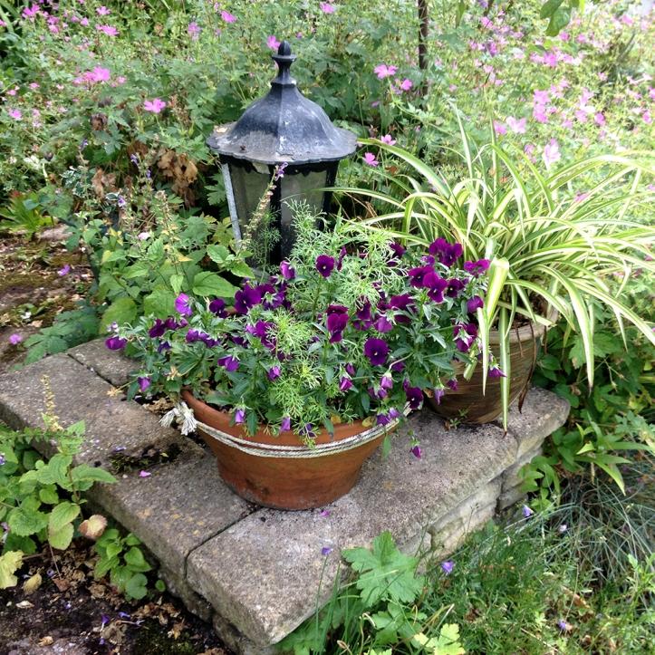 Mums garden 9