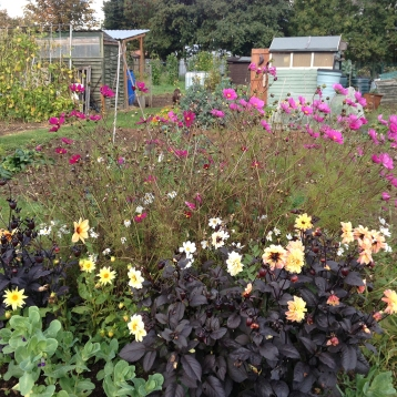 autumn flower bed