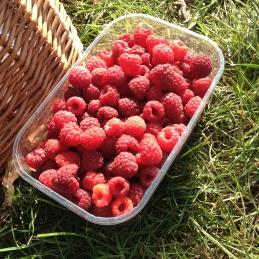 red raspberries