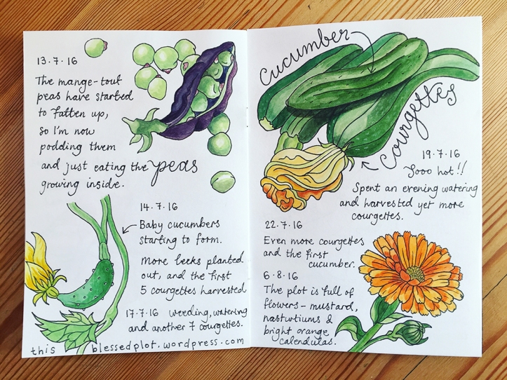 allotment journal p22-23