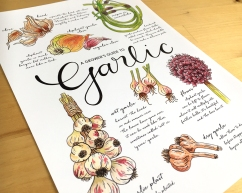 growers-guide-to-garlic-a4-3
