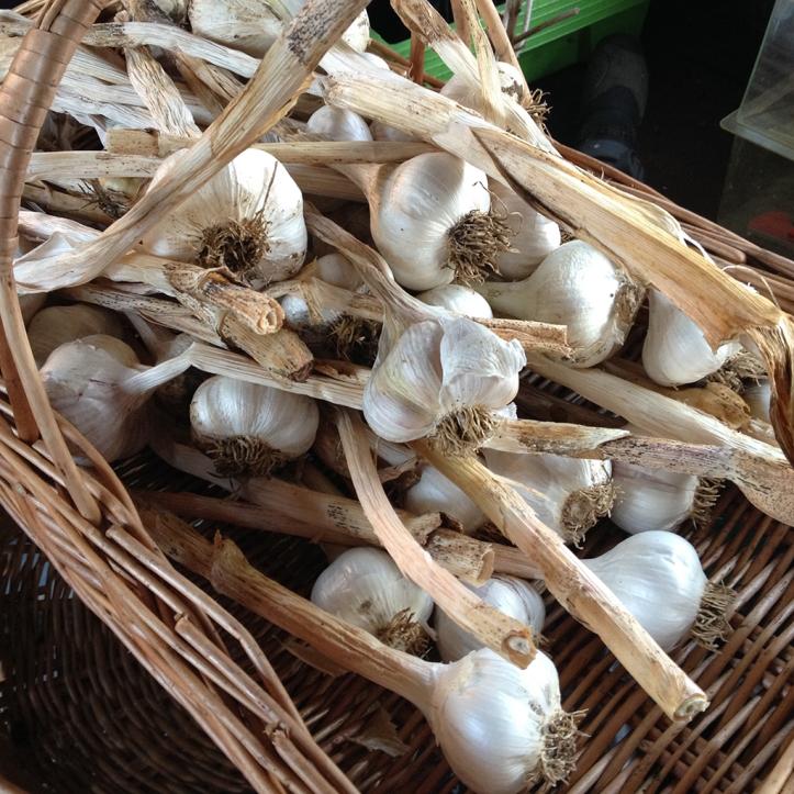 dried-garlic