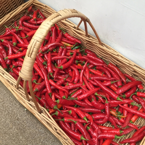 chillies in basket
