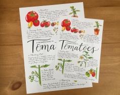 Tomato guide 2