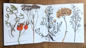 journal seed heads